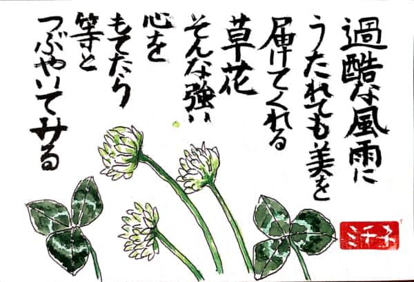 過酷な風雨にうたれても美を届けてくれる草花 そんな強い心をもてたら等とつぶやいてみる シロツメクサの花