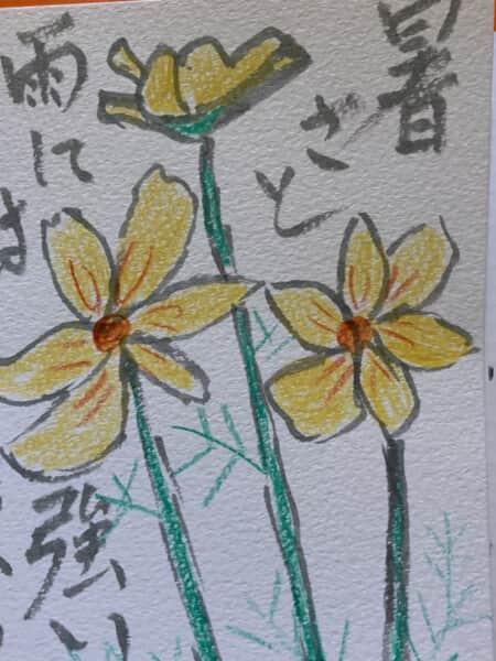暑さと雨には強い黄色いコスモスの花の絵手紙