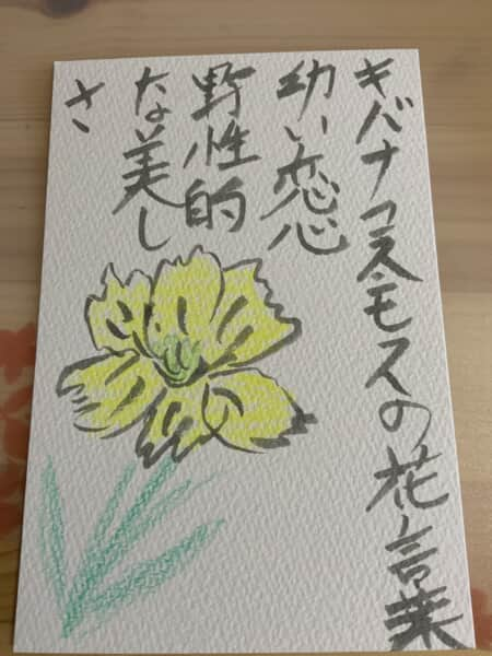 キバナコスモスの花言葉 幼い恋心 野生的な美しさ
