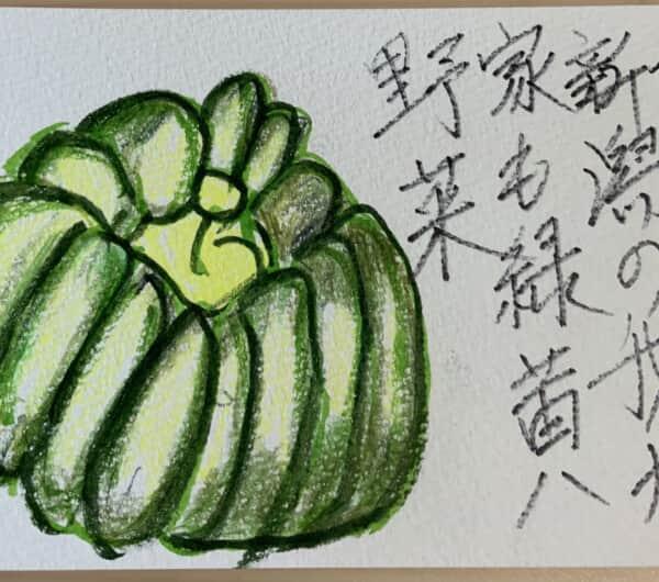 今日は新潟の我が家も緑黄野菜 〜かぼちゃの絵手紙〜