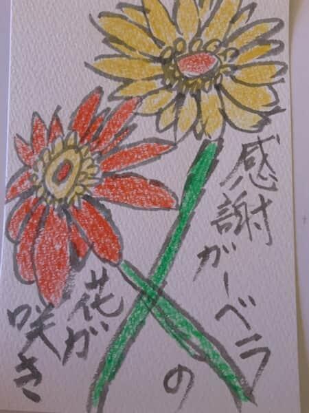 感謝ガーベラの花咲き