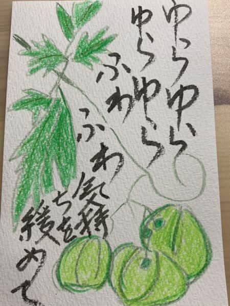 ゆらゆらふわふわ気持ちを緩めて 〜フウセンカズラの絵手紙〜